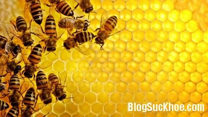 mat ong2 Chữa bệnh với mật ong nguyên chất