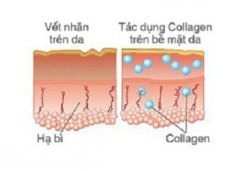 Collagen nano tai tao da1 Vai trò của collagen trong chăm sóc da