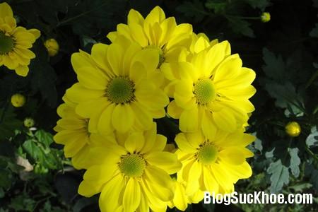 a1119 Bài thuốc chữa mất ngủ từ các loài hoa