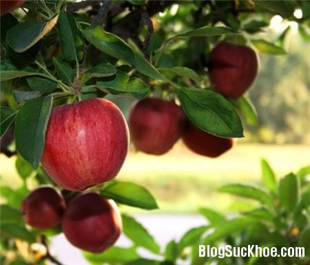 a137 10 loại vỏ trái cây rất tốt cho sức khỏe