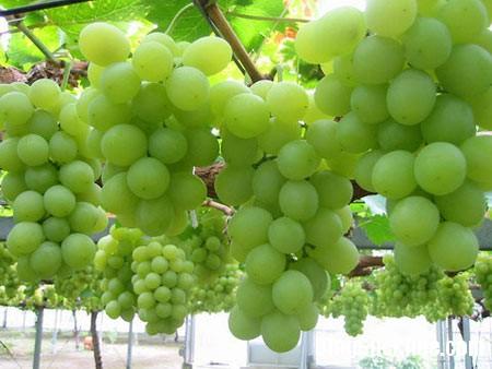 a146 10 loại vỏ trái cây rất tốt cho sức khỏe