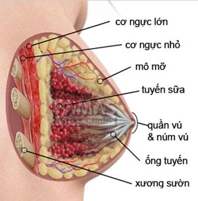 vu Thận trọng bệnh xơ nang tuyến vú