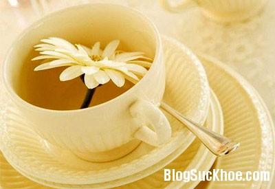hoa cuc Trị ho và đau họng mùa đông bằng trà thảo mộc