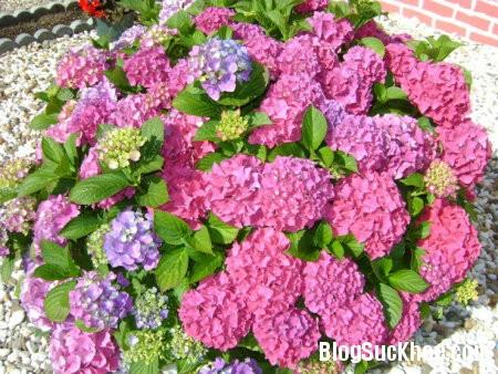 cam tu cau 6 loại hoa ngày Tết gây ảnh hưởng đến sức khỏe của bạn