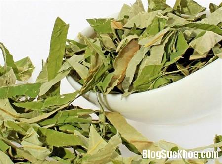 la sen 4 loại trà tốt cho bệnh nhân tiểu đường