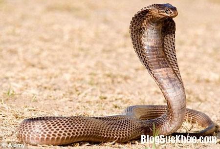 ran Sơ cứu khi bị rắn cắn