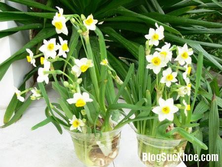 thuy tien 6 loại hoa ngày Tết gây ảnh hưởng đến sức khỏe của bạn