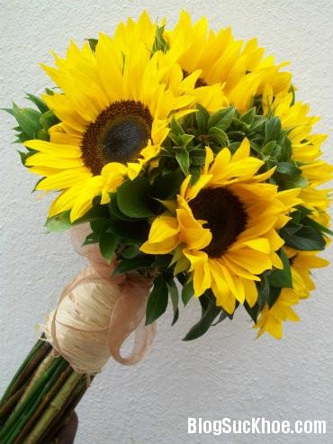huong duong2 Những công dụng về sức khỏe nổi bật từ các loại hoa