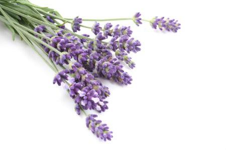 oai huong Những công dụng về sức khỏe nổi bật từ các loại hoa