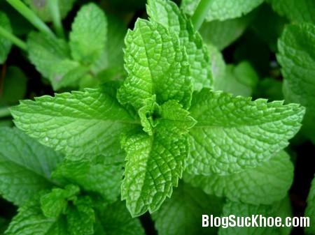 bac ha 8 loại thuốc quen thuộc có thể trồng tại nhà