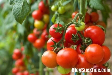 ca chua1 TOP các loại rau củ có tính kháng viêm cao