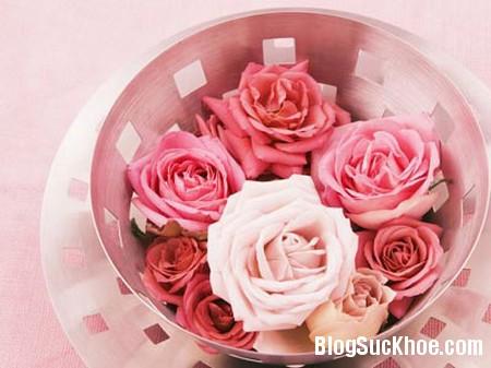 hoa hong 5 lợi ích của nước hoa hồng bạn nên biết