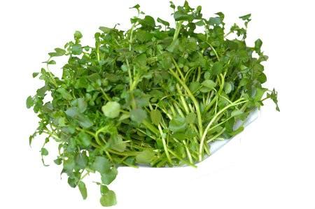 xa lach 5 loại rau củ phụ nữ nên ăn hàng ngày