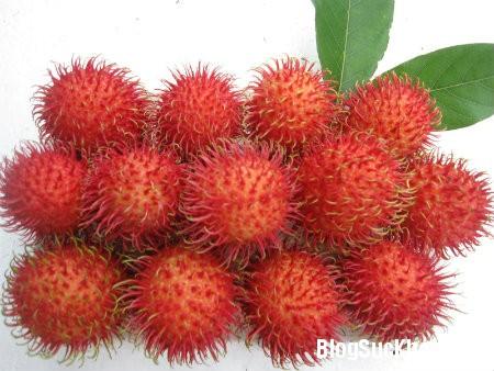 chom chom Lợi ích sức khỏe từ trái chôm chôm