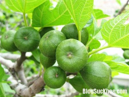 qua va Bài thuốc chữa bệnh từ cây vả