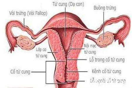 tu cung2 Những điều chị em cần lưu ý khi cắt bỏ tử cung