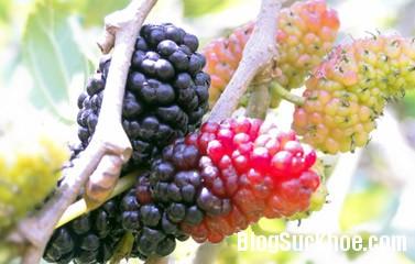 dau11 Bài thuốc cho người bệnh gan
