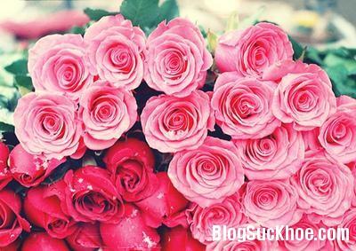 hoa hong 10 bài thuốc chữa đau đầu bằng hoa