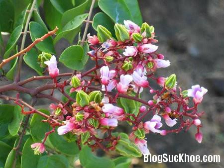 hoa khe Hoa vườn nhà: Dân dã mà hữu dụng