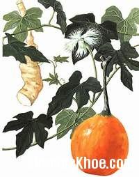 thien hoa phan Bài thuốc chữa bệnh đái tháo đường