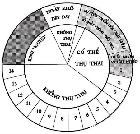 trung1 Phương pháp canh giao hợp quanh ngày rụng trứng