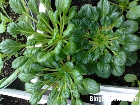 cai1 Thực phẩm giúp ngừa dị ứng trong mùa thu