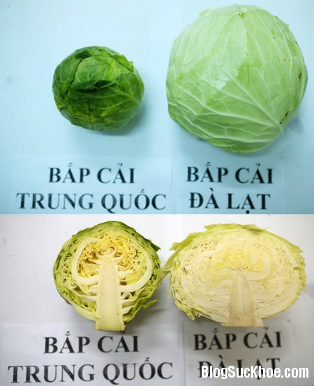 4 Phân biệt rau củ quả Trung Quốc và Đà Lạt