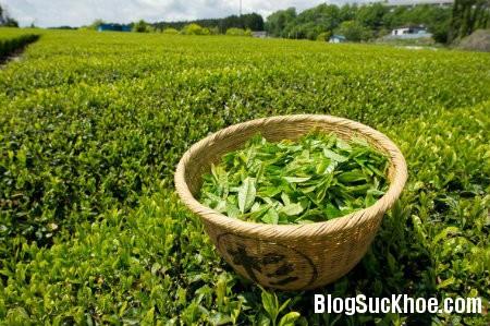 tra4 Công dụng của trà xanh