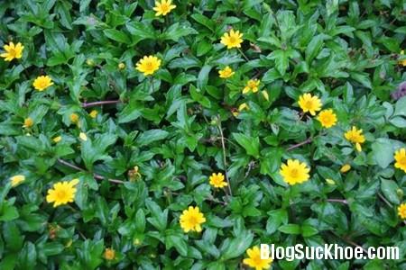 186 Điều trị mụn cám dứt điểm bằng lá cây trong vườn
