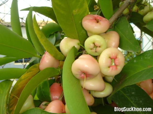 1456 Những loại trái cây không nên ăn nhiều
