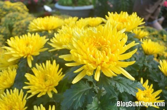 1114 Bài thuốc trị ho từ hoa hiệu quả