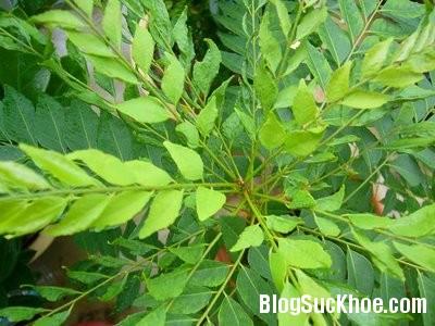 1154 3 loại lá cây giúp trị gàu hiệu quả