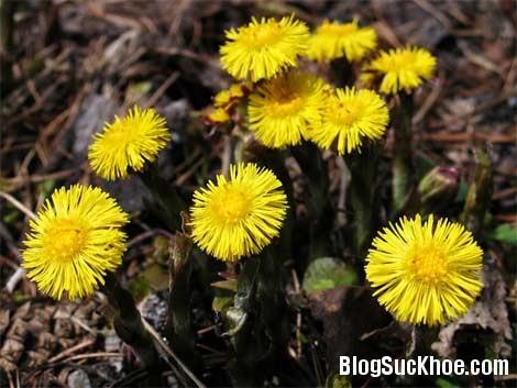1382 Các bài thuốc hay trị ho bằng hoa