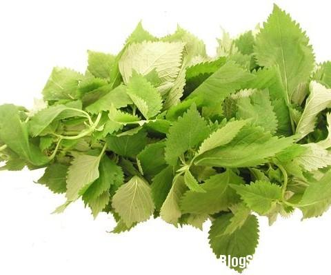 1169 Những loại rau chữa bệnh thần kỳ