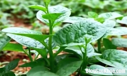 7 Top các loại rau làm đẹp da hiệu quả