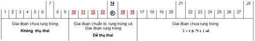 1353 Dấu hiệu nhận biết ngày rụng trứng