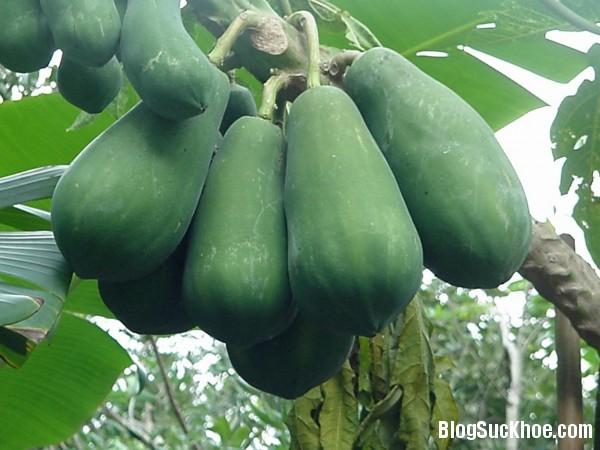 1139 Những loại trái cây không phải mẹ bầu nào cũng nên ăn