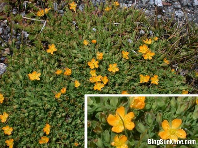 138 Bài thuốc chữa bệnh từ cây nọc sởi