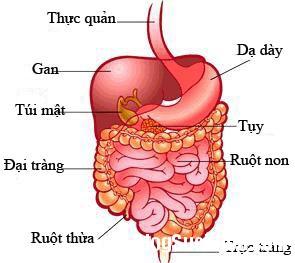 183 Triệu chứng bệnh Crohn