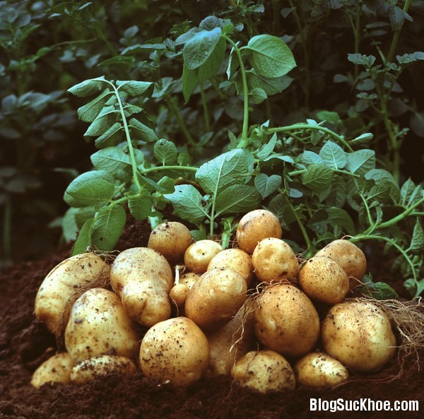 1329 Lý do bạn nên ăn khoai tây đều đặn