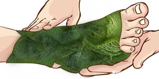 1327 Dùng lá bắp cải quấn quanh chân giúp trị đau khớp