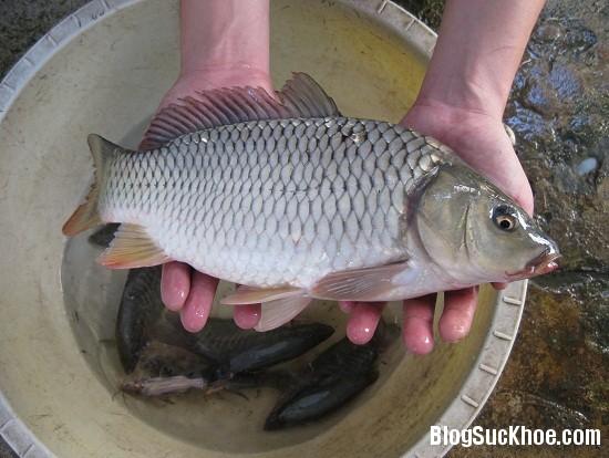 1247 Những bộ phận của cá dễ gây ngộc độc khi ăn