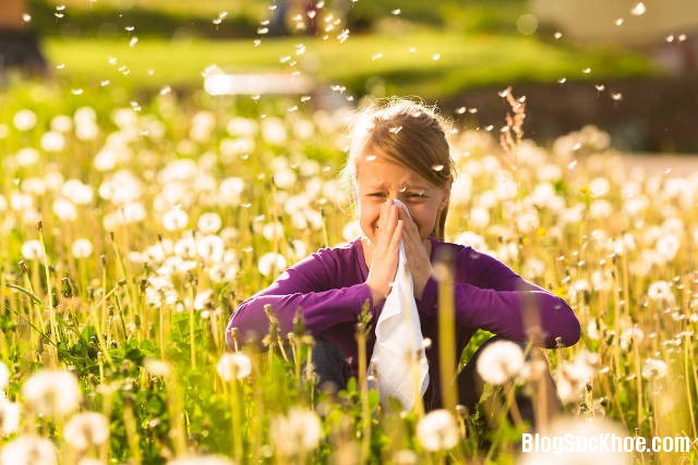 144 Dị ứng phấn hoa và cách phòng ngừa
