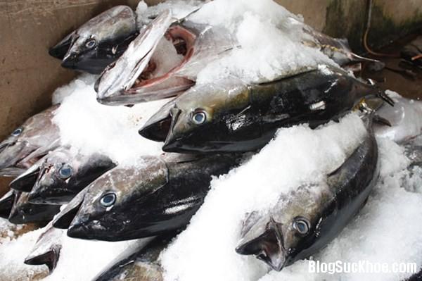 129 Mẹo phân biệt cá biển tươi đông lạnh và cá biển chết đông lạnh