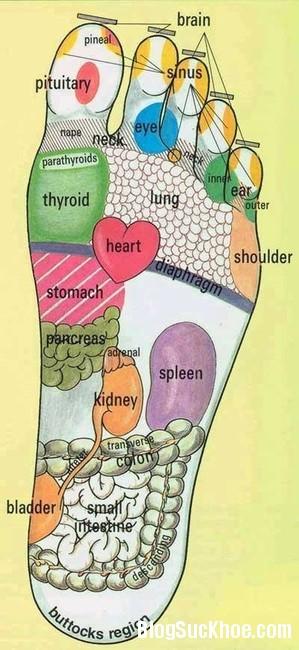 197 Phương pháp massage bàn chân giúp chữa bệnh