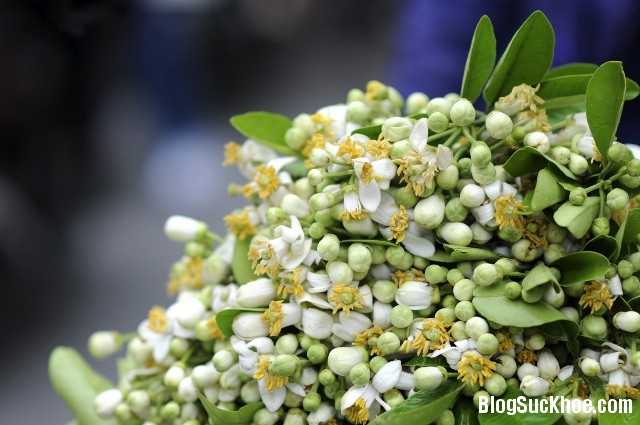 1145 Một số bài thuốc chữa bệnh từ hoa bưởi