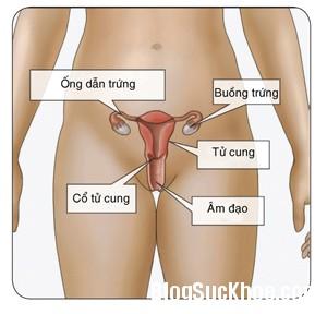 1189 Những điều cần biết về Chlamydia