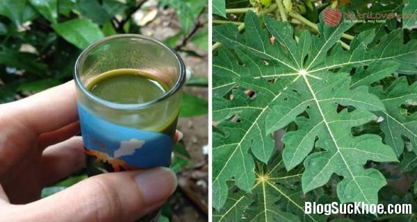 124 9 lợi ích sức khỏe khi uống nước lá đu đủ