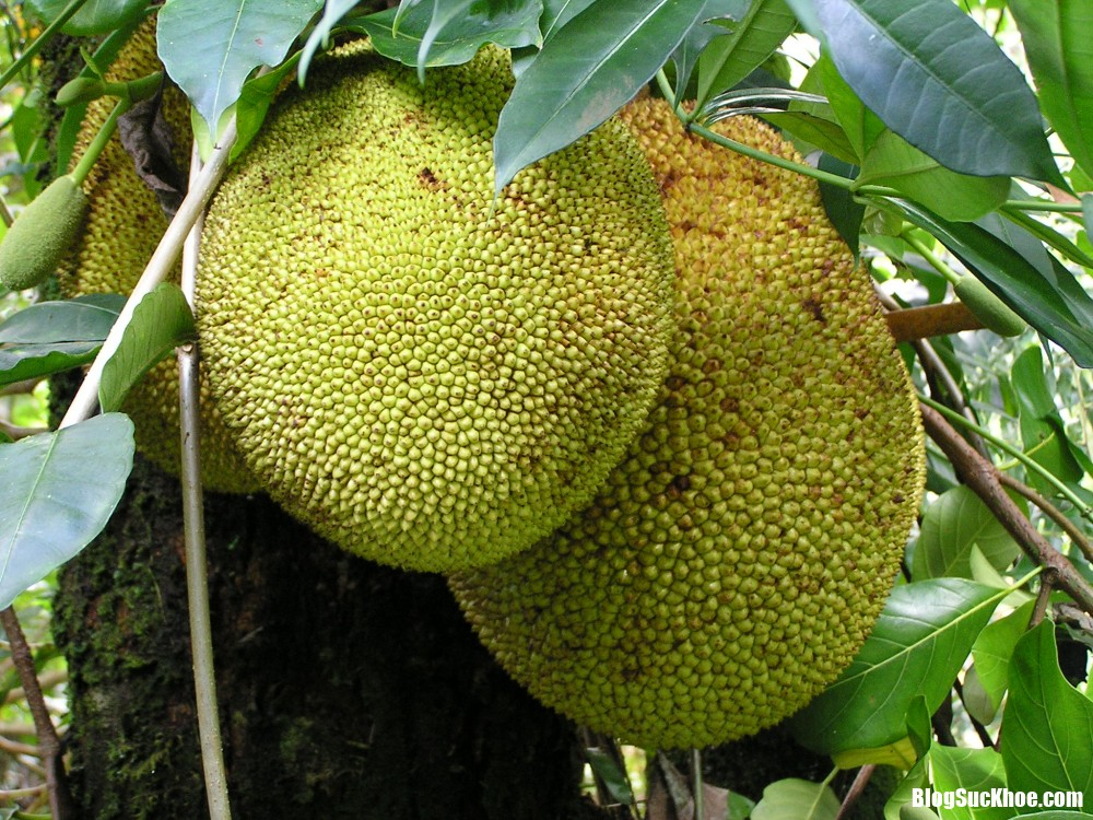 nguoi bi benh da day co an duoc mit khong 2008 phunutoday Người bị bệnh dạ dày có nên ăn mít ?