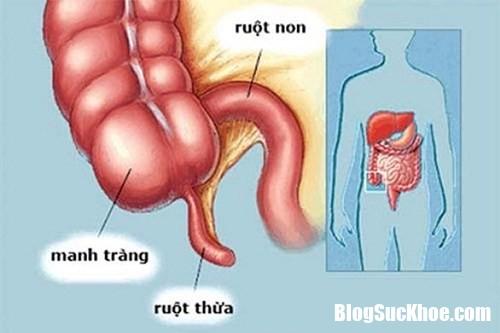 144053 WZUZ Chức năng của ruột thừa trong hệ tiêu hóa